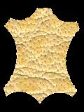 cuir-desert